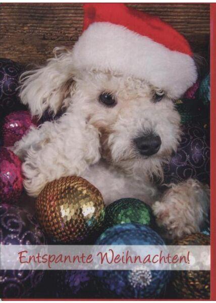 Weihnachtskarte Hunde -Tiermotiv: Entspannte Weihnachten!