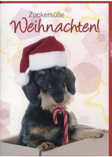 Weihnachtskarte Hunde -Tiermotiv: Zuckersüße Weihnachten!